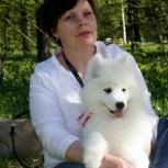 Перспективные щенки самоеда, Кемерово