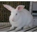 Комбикорм для кроликов, Кемерово