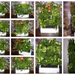 Красивый бизнес gardenwall, доступен каждому (ищем представителей), Кемерово