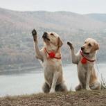Кинолог, зоопсихолог, дрессировка собак, Кемерово